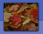 Photo of fall leaves